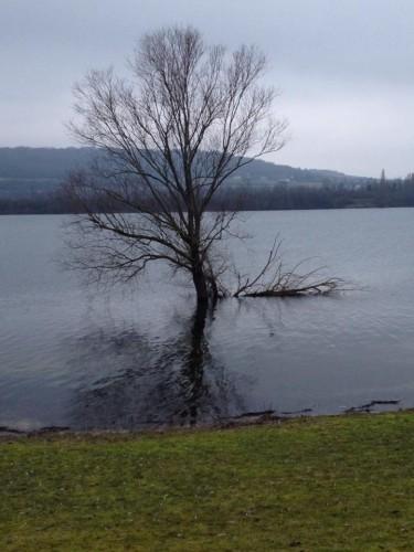 arbre Elie Mehdé.jpg
