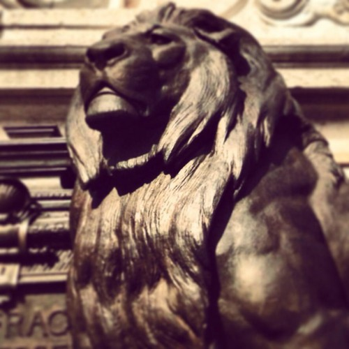 lion, sylvia el aarabi, sylvia berchel, philippe sollers, gallimard, femmes