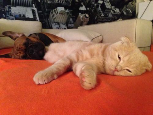 le chat et le chien.jpg