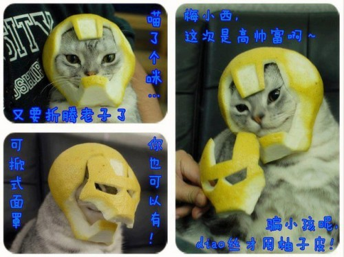 daft punk,star wars, cat, chat, lemon, citron